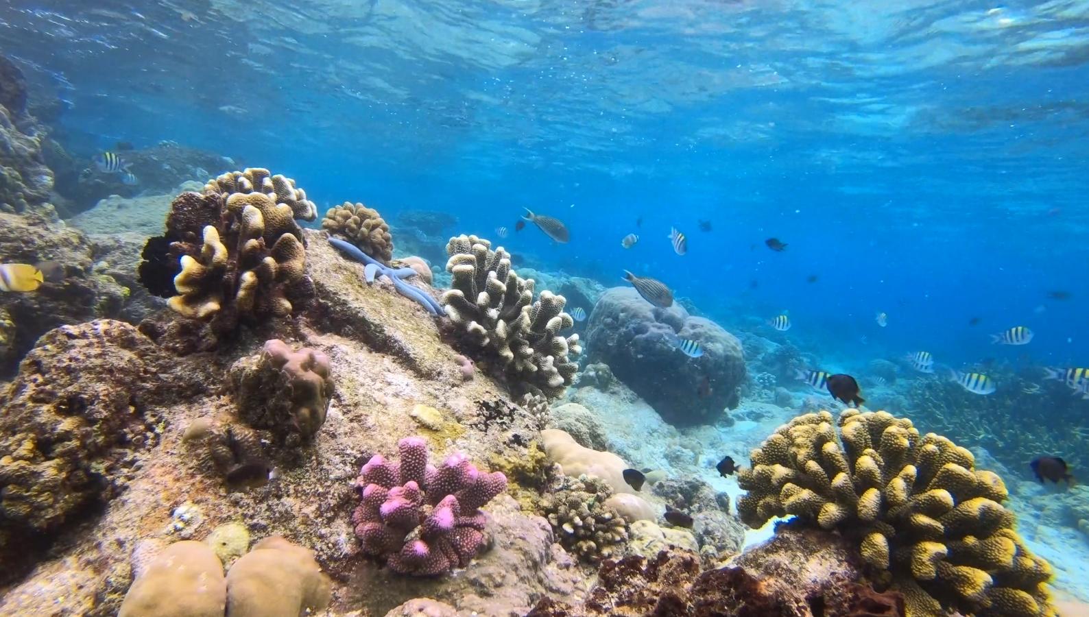 Marine Life at Raja Ampat