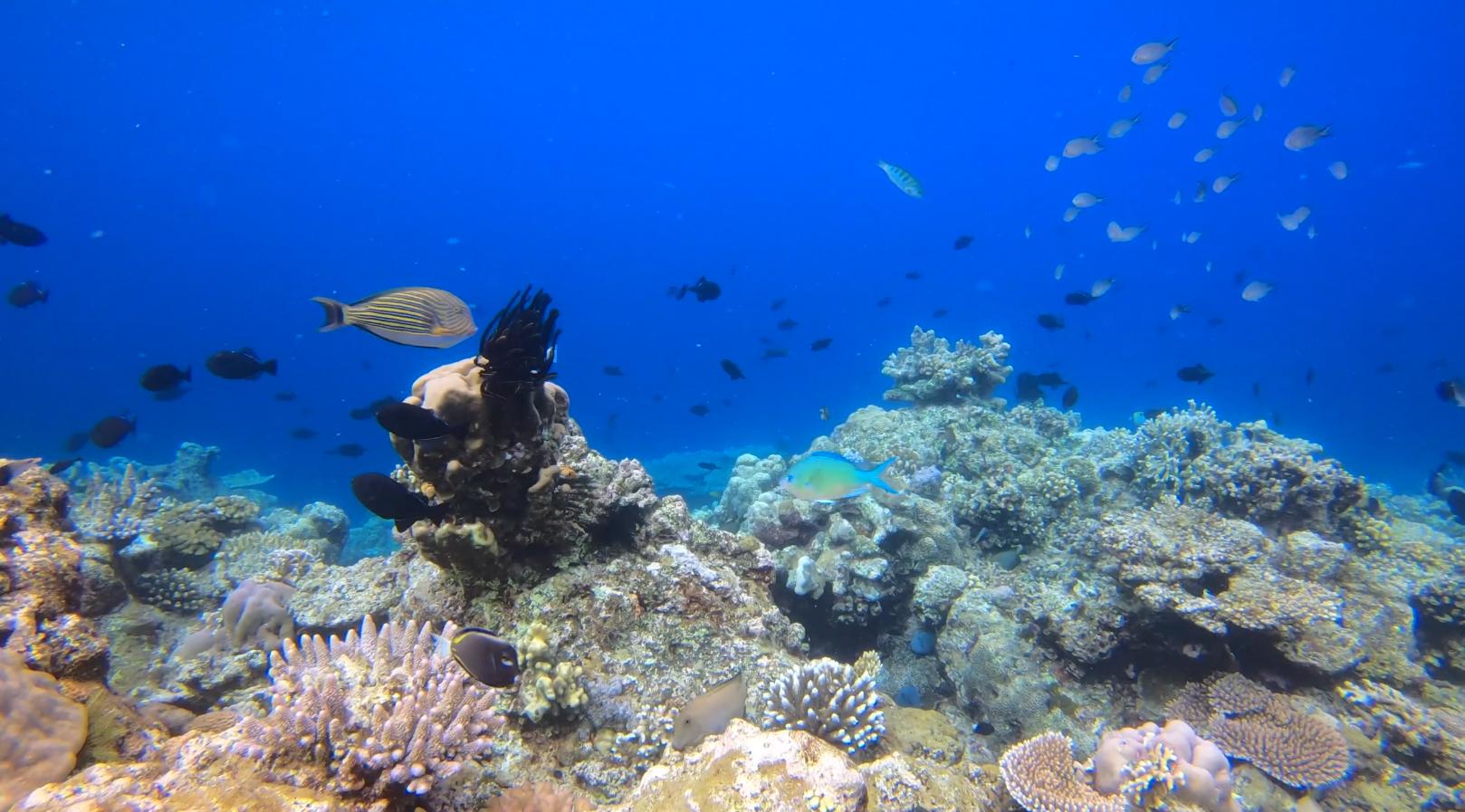 Marine Life in the Banda Islands