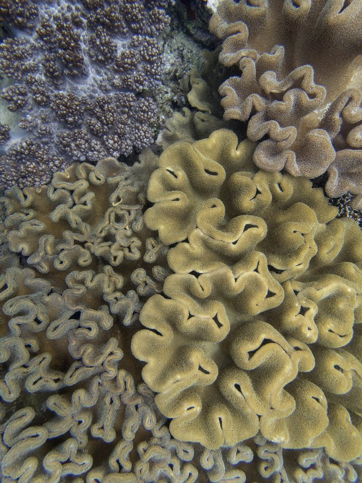 Soft corals at Raja Ampat