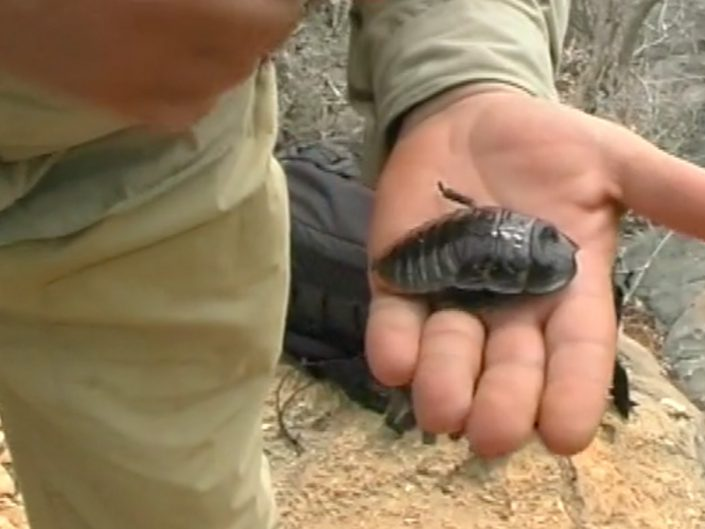 Cockroach expedition to Tsinamampetsoa in Madagascar 2004
