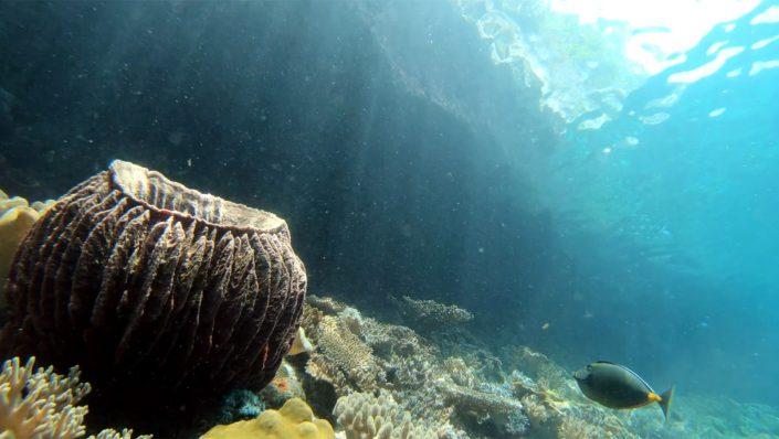 Coral reef fish Raja Ampat